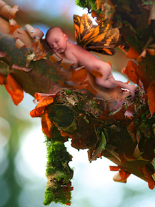 Fairy Baby in Tree with Moss Photo